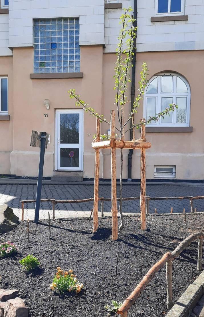 Apfelbaum vor dem Pfadfinderhaus